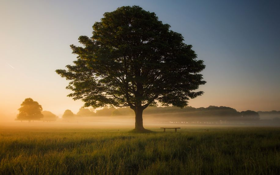 A photo of a lone tree at sunrise. There is a bench under the tree and a bit of fog on the ground.